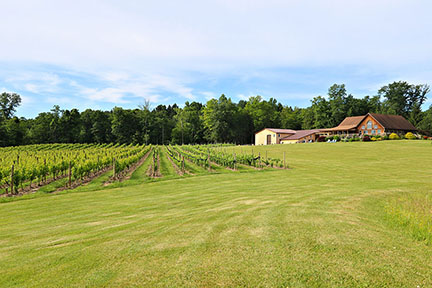 2019 Buttonwood Grove Winery Photo of Vineyard, Lawn and Buidlings