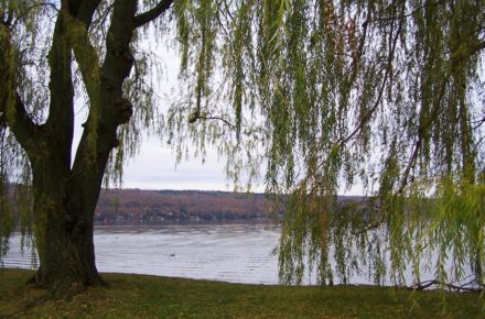 Willow Tree at Stewart Park looking out over Cayuga Lake